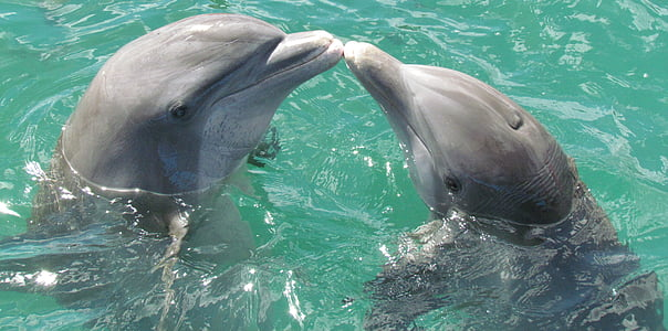 two dolphins in body of water