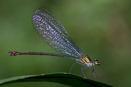 closeup photography of grey and brown dragonfly perched on green leaf plant