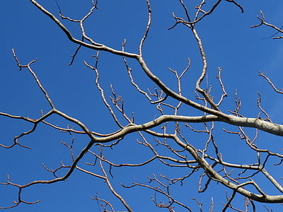 brown tree branches