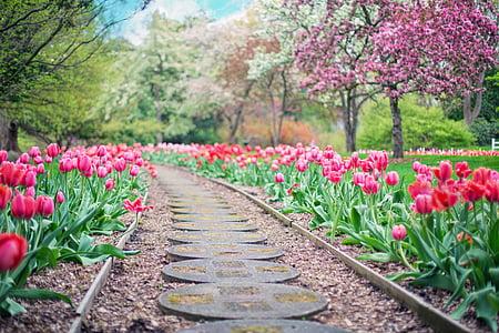 desire road in between pink tulip flower field