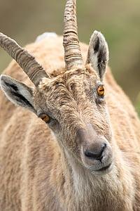 brown antelope at daytime