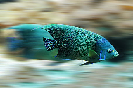 panning photography of green fish