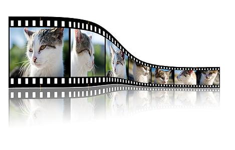 cat photo film