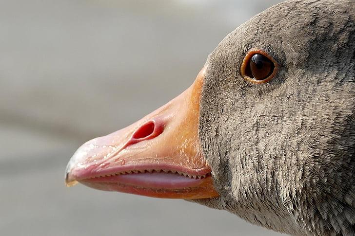 gray animal closeup photo