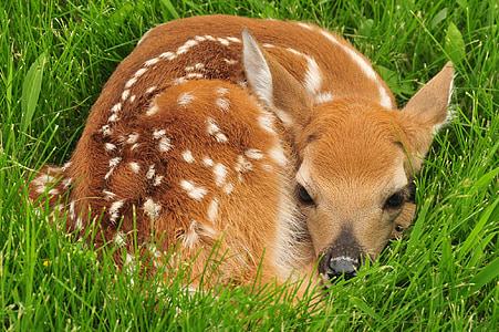 deer on grass field