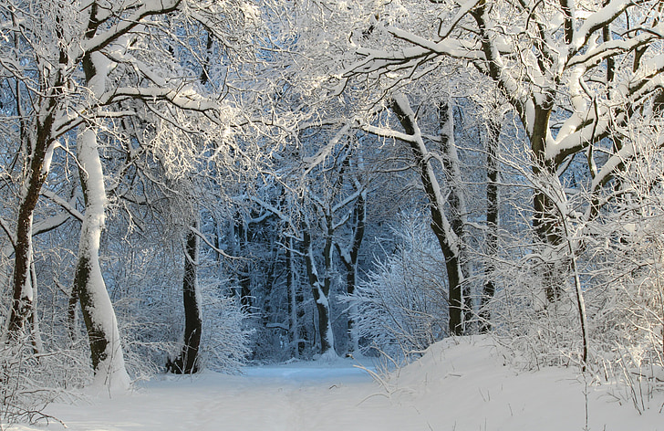 photo of forest trees filled with snow