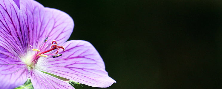 purple malva flower selective focus photography
