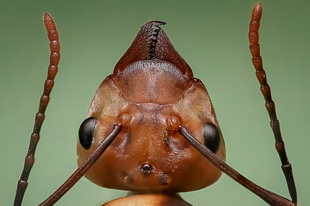 close-up photography of fire ant
