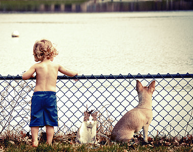 children in blue shorts beside white and gray cat in front of body of water during daytime