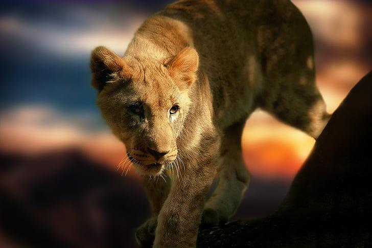 selective focus photo of yellowtiger cub