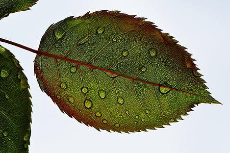 dews on green leaf
