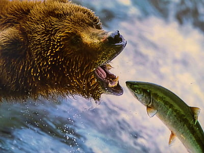 grizzly bear catching fish near waterfall