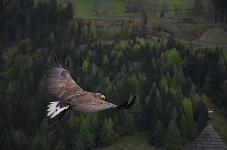 bald eagle flying above trees at daytime