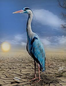 white and blue egret photo