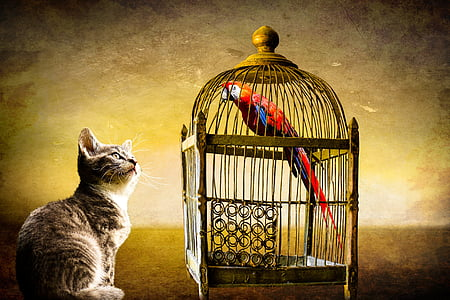 cat watching bird inside cage