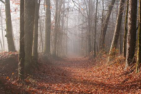 brown pathway between gray trees