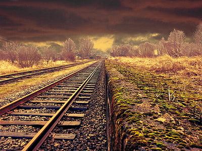 brown metal train rail in between trees