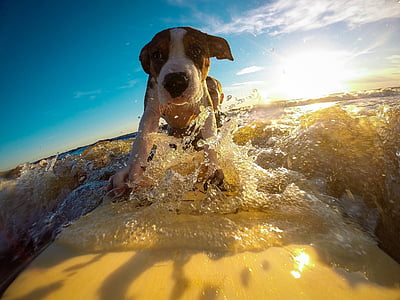 white and brown puppy surfing