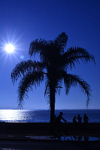silhouette of palm tree during daytime