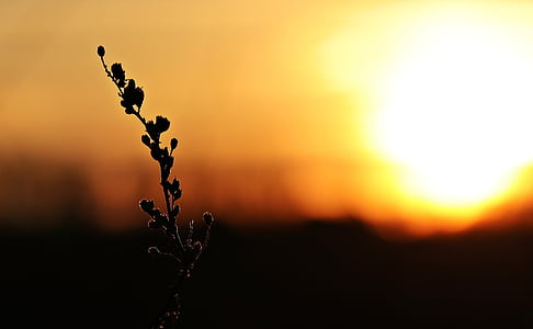 silhouette of plant under golden time