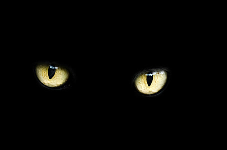 yellow and black cat's eye