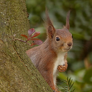 selective photo of brown and white squirrel