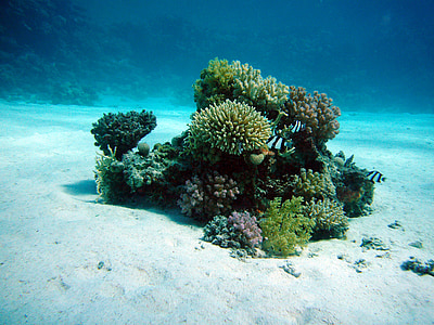 green coral reef in underwater