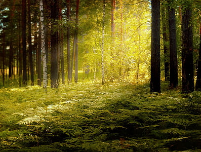 forest with sunlight illustration