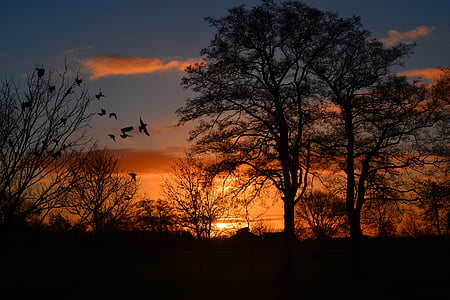 silhouette of trees taken at sunset