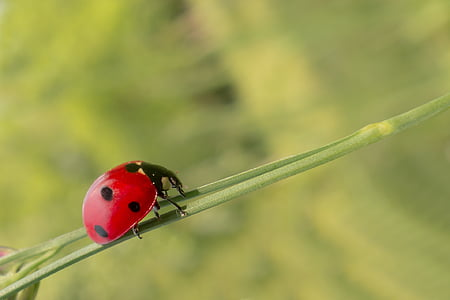 close-up photography of lady bug on green twig
