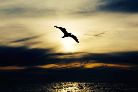silhouette of gull flying