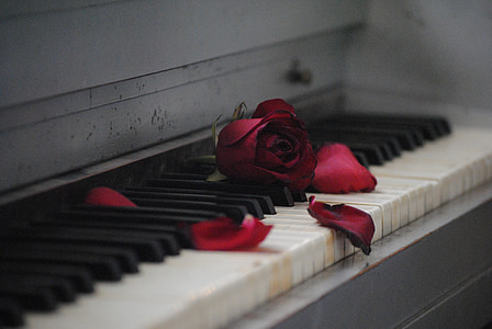 shallow focus photography of red rose on white and black piano
