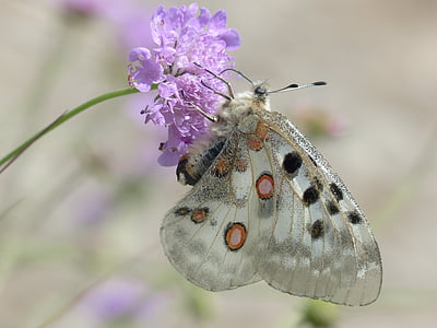 shallow focus photography of butterfly with purple flower