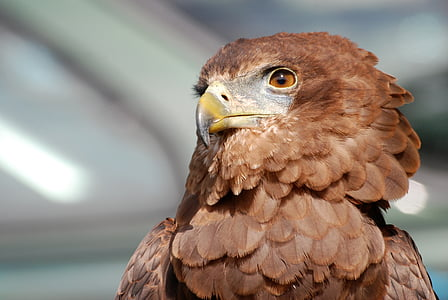 brown bird in tilt shift lens photography