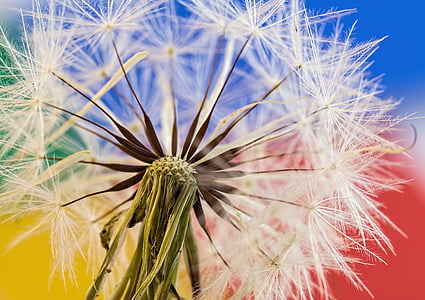 close-up photography of dandelions
