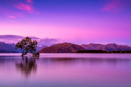 tree in the middle of body of water