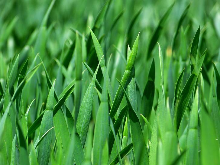 photograph of grass macro shot