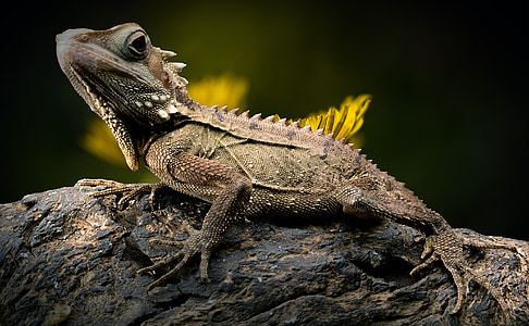 green and brown Iguana on tree trunk