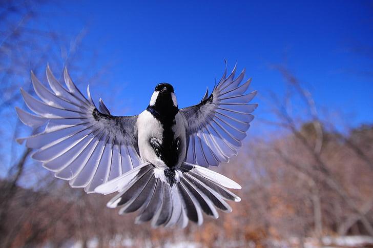 small white and black bird
