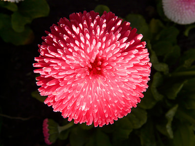 shallow focus photography of red petal flower plant