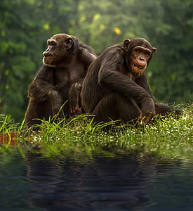two brown primates near bodies of water selective focus photograph