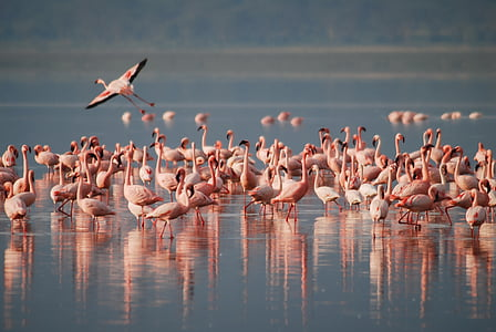 Flamingoes on body of water