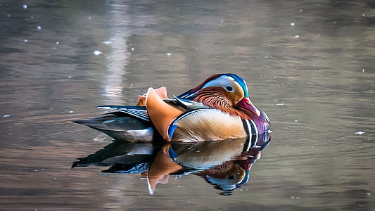photo of duck on top of water