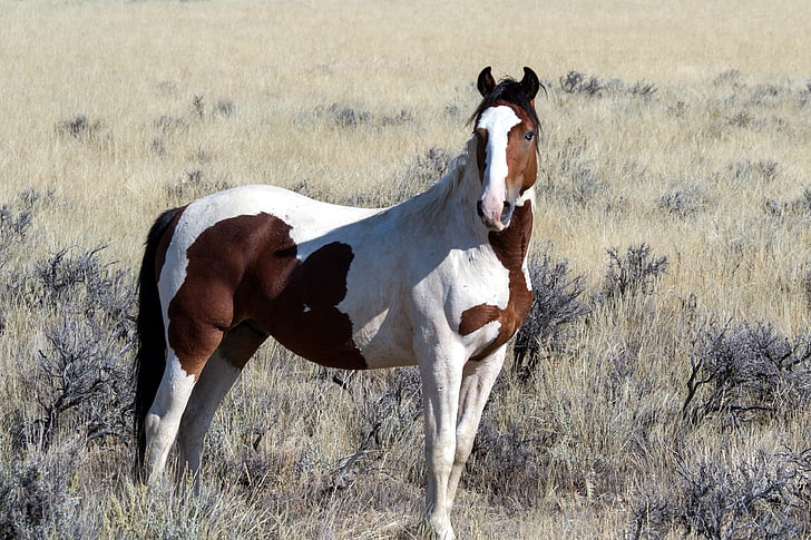 Royalty-Free photo: White and brown horse | PickPik
