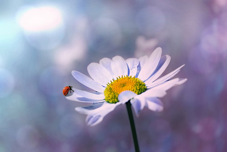 white daisy flower in selective focus photography