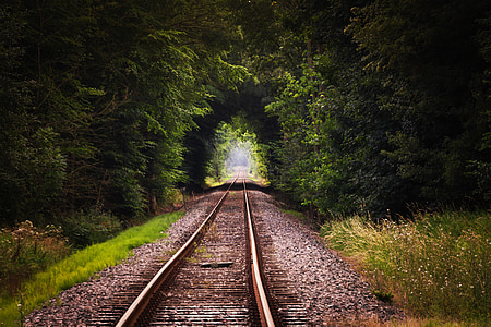 railway surrounded with green leaf plant during daytime