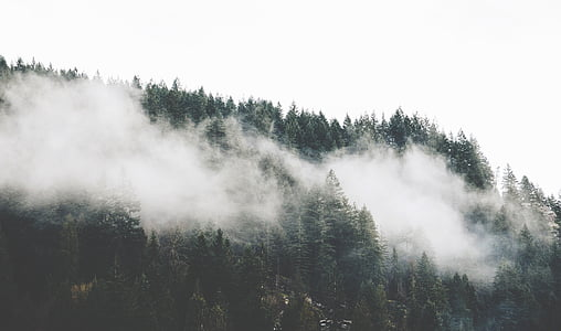 trees covered by fog on the mountain
