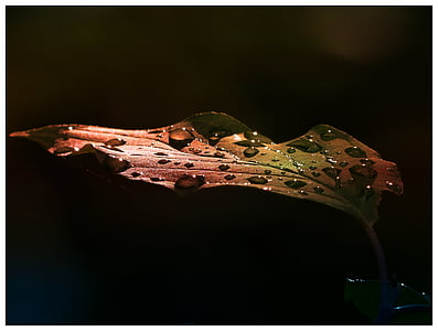 time lapse photography of droplets on brown leaf