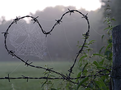 heart-shaped barbed wire with spider webs in close-up photography