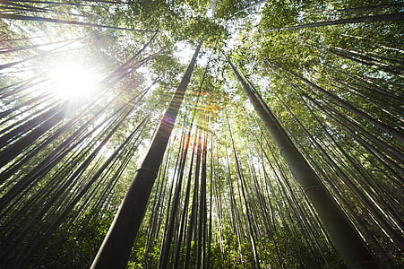 worms eye photography of bamboo trees